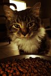 Carter the cat by SublimeBudd