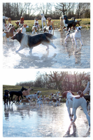 Breyer Dogs - At The Ice Pond by The-Toy-Chest