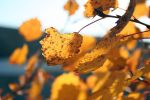Autumn colors 07 by gamebalance