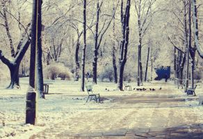 snow. by anusz
