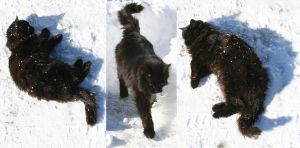 black cat on white snow 3 by two-ladies-stocks