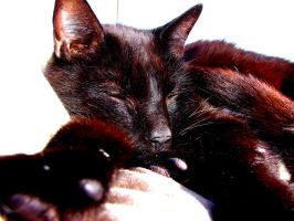 Random Picture of my cat :p by SteampunkerGo