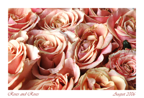 Rose and Roses by Cleonor