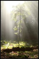 Reach to the Light by FlorentCourty
