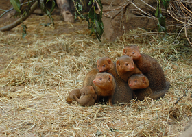 Mongoose family by Tapire