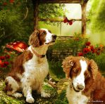 Welsh Springer Spaniel dogs by Kwekkie1982