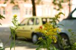 cars and flowers 2 by Kayanya