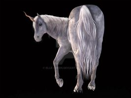 The End - White Unicorn Rear View Stock by Elle-Arden