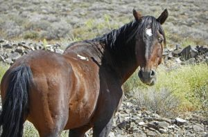 Wild Horse of Nevada by Synaptica