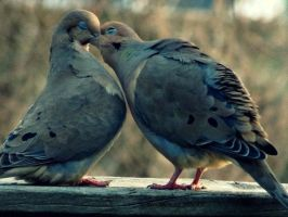 Just a Kiss by Michies-Photographyy