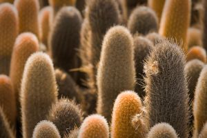 Cactus City by abey79