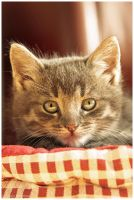 Tommy six weeks (2) by Claudia008