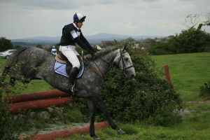 Cross country 24 by Kennelwood-Stock