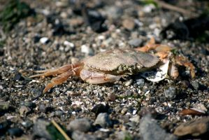 anyone feelin crabby out there by rhaley