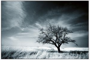 Colder by gilad