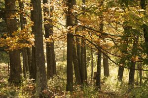 A Grove Of Trees In Fall by hollysfollys