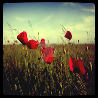 Field of Love by Labrinth63