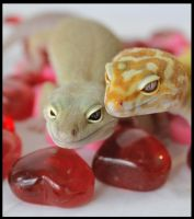Gecko Valentines by creative1978