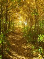 A Leafy Trail by Cao