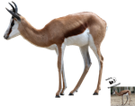 Cut-out stock PNG 93 - springbok by Momotte2stocks