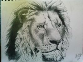 more detailed lion sketch by hellheaven17