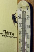 Shitty Temperature by alekparkour