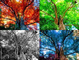 Colorful Foliage Whispers --- Photomontage 1 (x4) by Cloudwhisperer67
