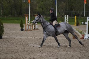 Grey Horse - Show Jumping Stock 8.23 by MagicLecktra