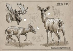Animal Studies: 2 by Clotaire