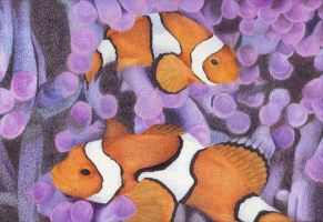 Clownfishes by LauraMel