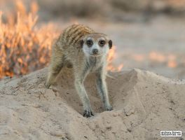 Digging in the sand by jaffa-tamarin