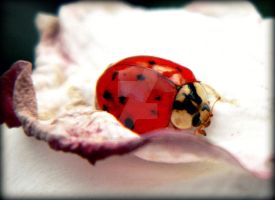 Lady Bug by RainbowCartilage