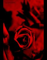Red Rose by x---A-R-N-O---x