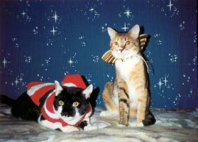in time for the holidays by cat-lovers