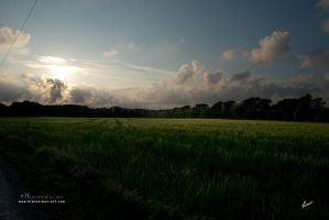 Evening field by Hieronimus-art