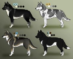 Siberian Husky Adoptables: CLOSED by Sedillo-Kennels