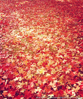 Bury Me in Autumn Leaves by OdieFarber