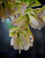 Morning Rain 3-30-11 by Tailgun2009