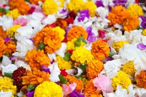 Colourful flowers - India by Yiliapic