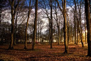 Park HDR by fotomartinez