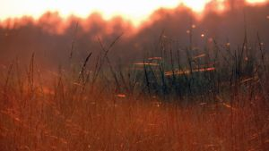 Golden Grass by Boby3000