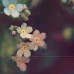 :FORGET-ME-NOT: I by onixa