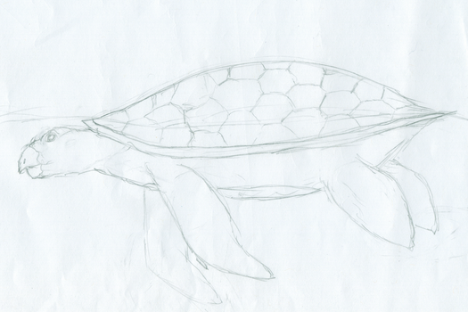 Turtle by LadyAria