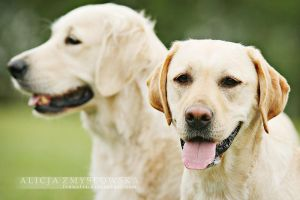 Retrievers by feanutri