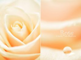 Rose - XIII by AlexEdg