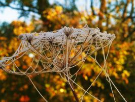 SKELETON OF JEWELS AND THREADS by trevj