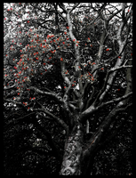 Winterberries -edited- by IoannisCleary