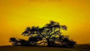 the tree of life by sandeepsarma