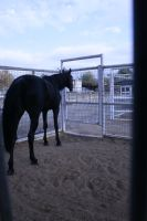 black horse stock 7 by xbr0kendevotion