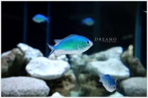 Fishes2 by D-R-E-A-M-O